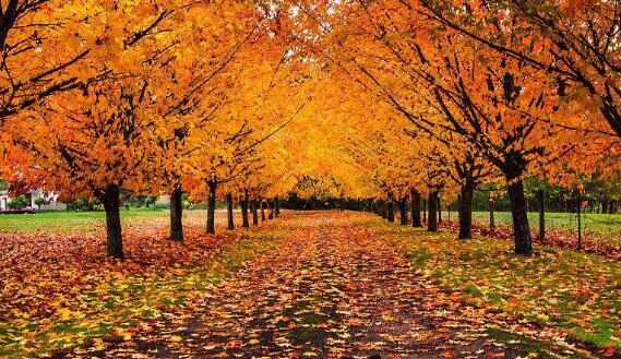 关于秋天的美文摘抄两篇