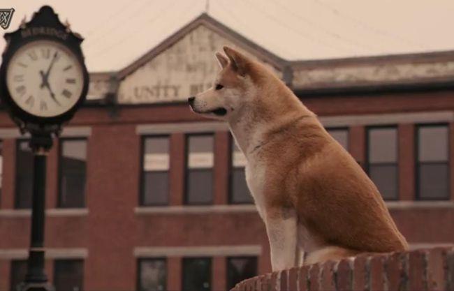 《忠犬八公的故事》经典台词